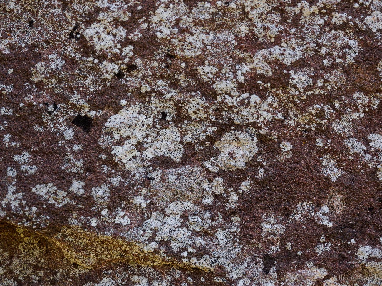 weiße Steine, Flechten
