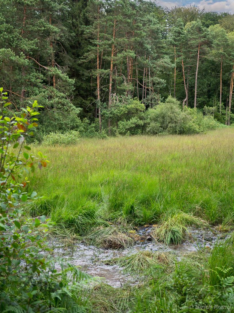 wiesbuettmoor, Mooraugen