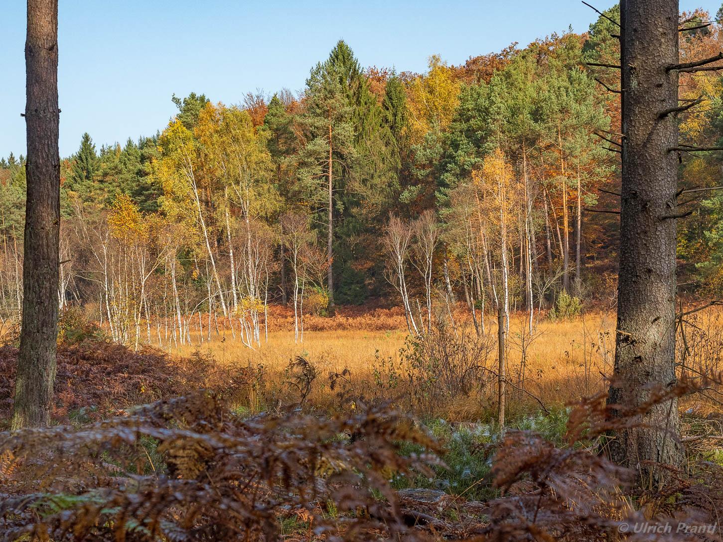 Wiesbüttmoor im Herbst