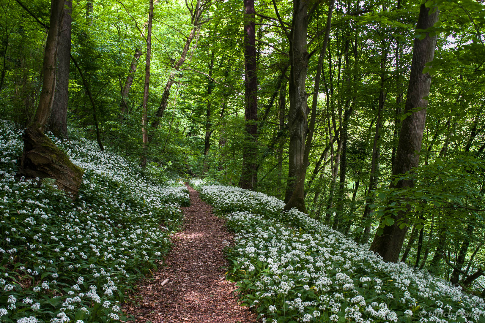 Spessart Wald im Frühling