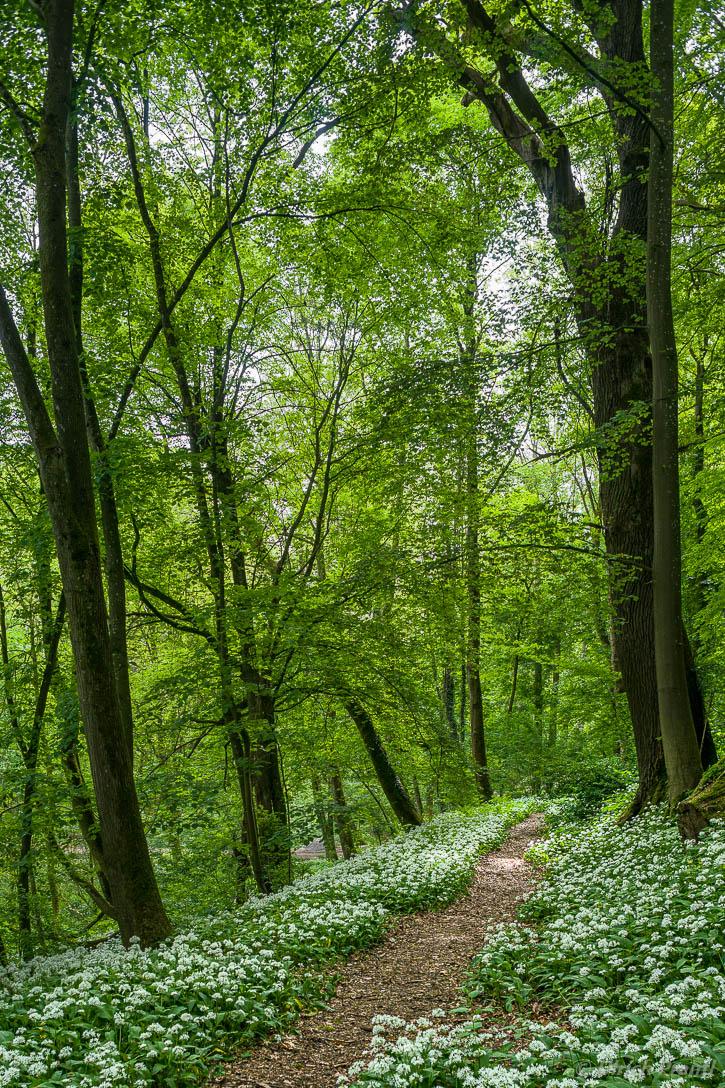 Wald im Südspessart