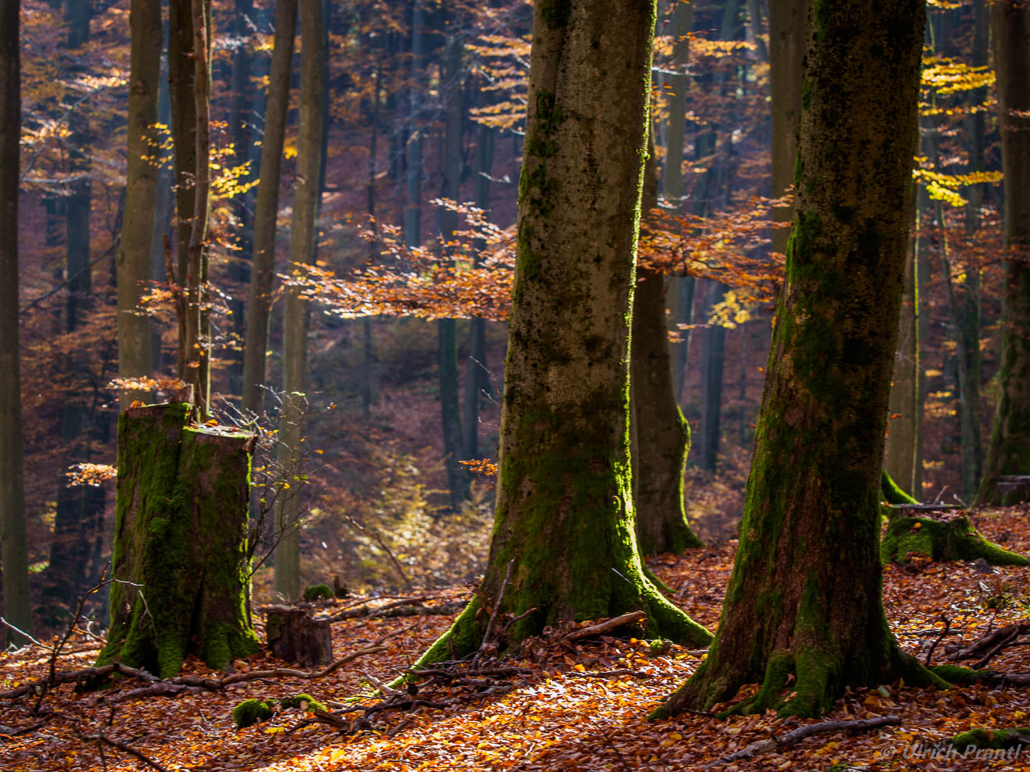 Wald im Spessart