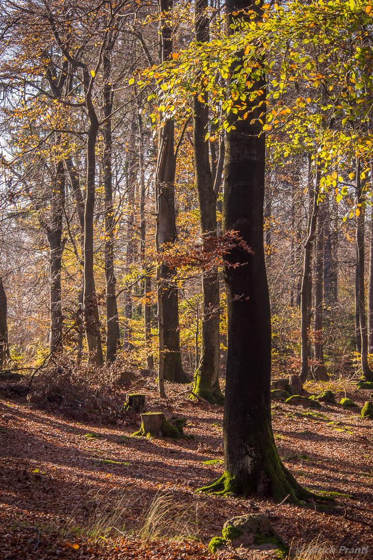 Spessartwald im Herbst