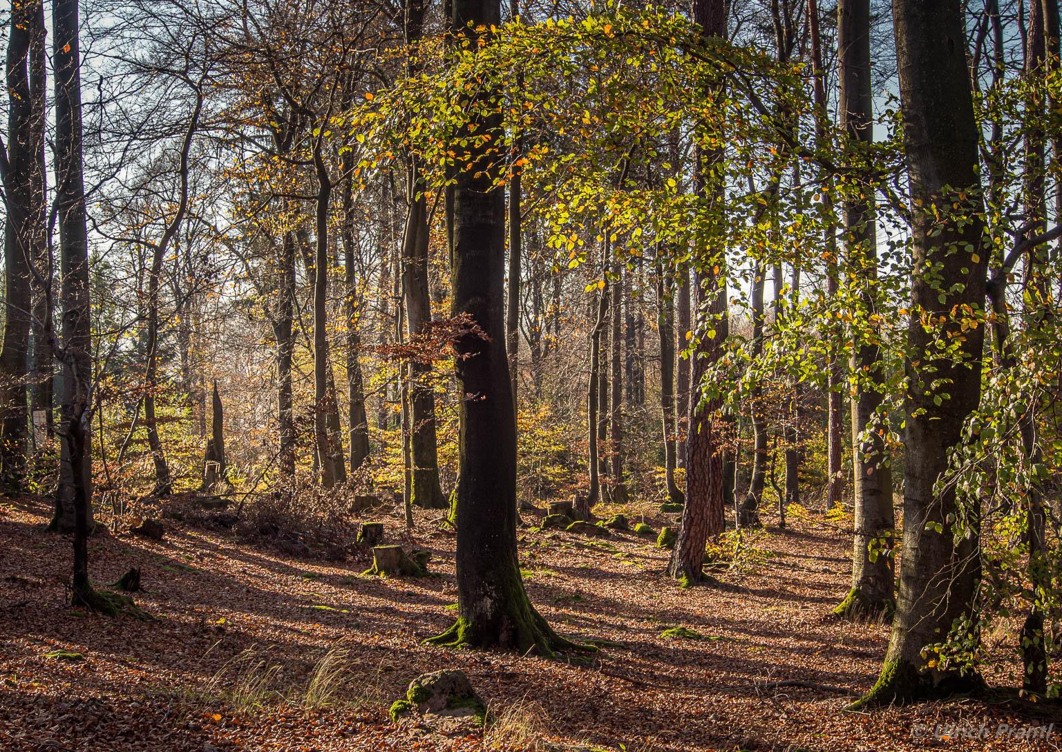 Herbstwald im Spessart