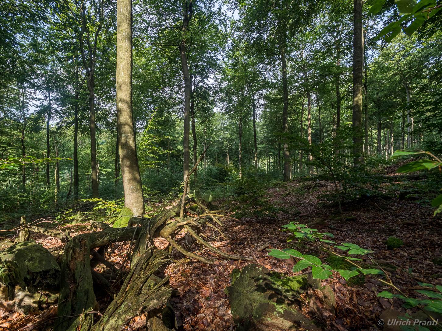 Spessart Wald Totholz