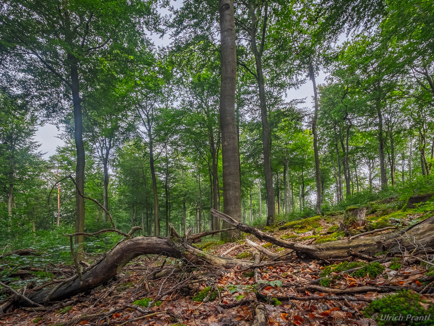 Spessart Wald