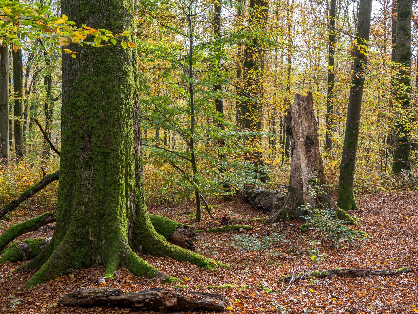 Spessart Herbst Wald