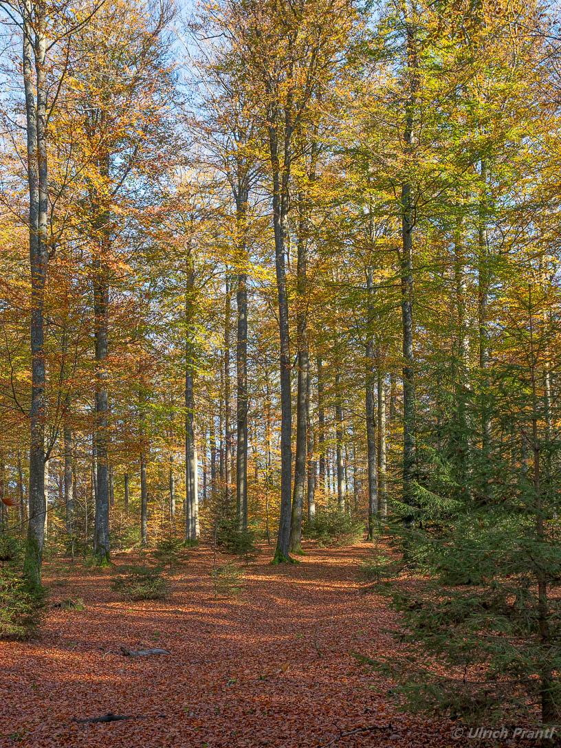 Spessartwald