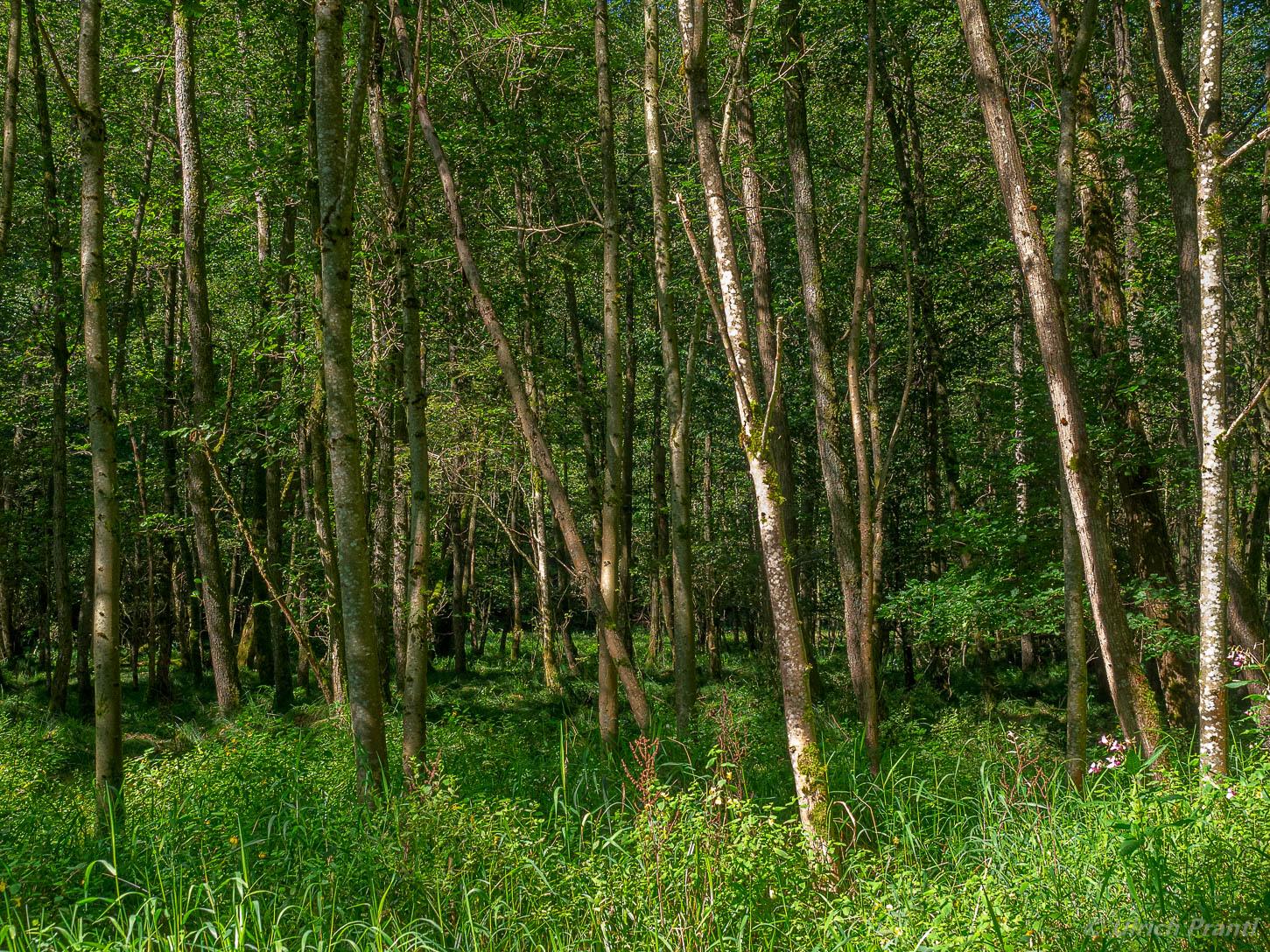Auenwald im Spessart