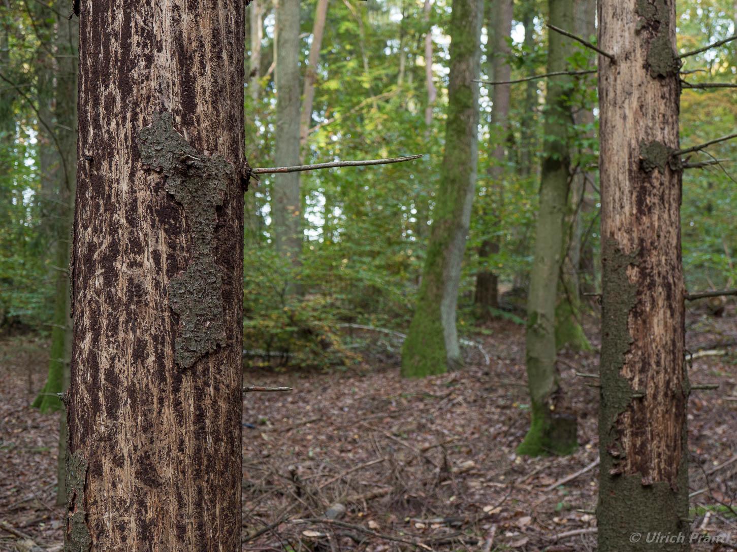 Waldschäden im Spessart