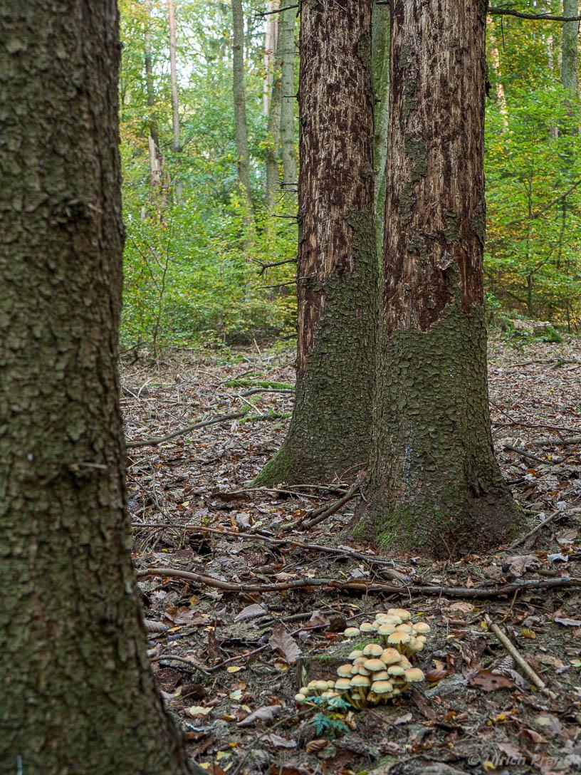 Spessart Wald krank