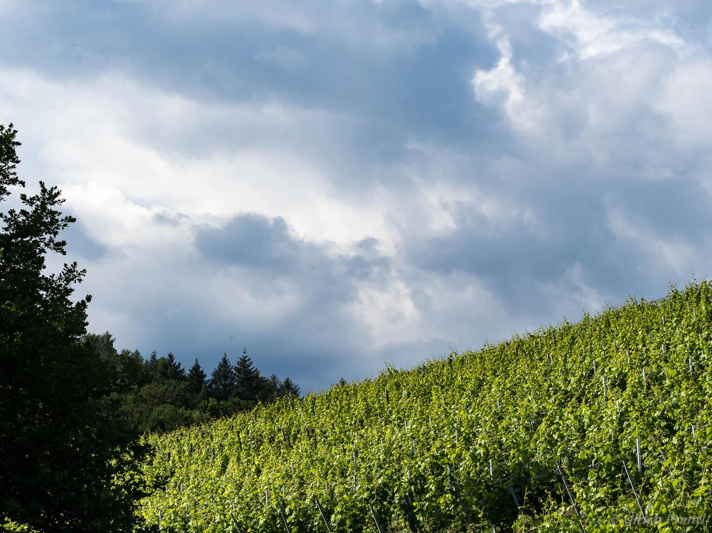 Rück, Weinberge im Elsavatal