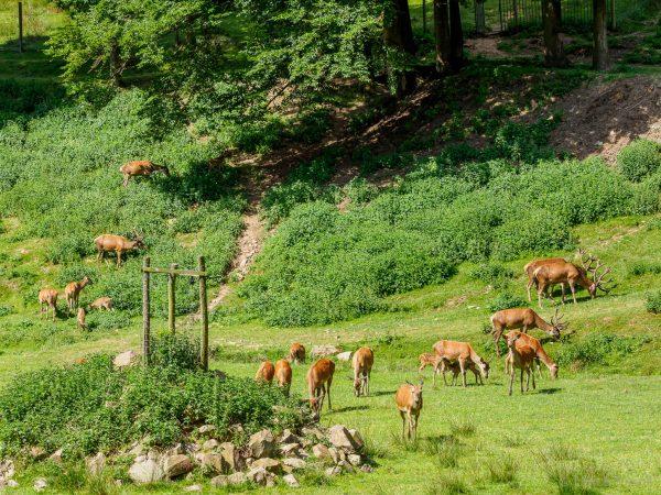Tierpark Heigenbrücken